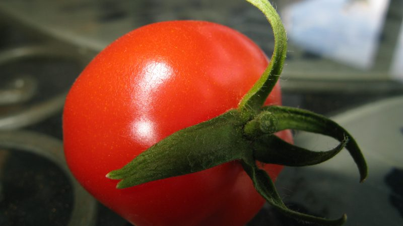 Tomatoes come in all sizes.
